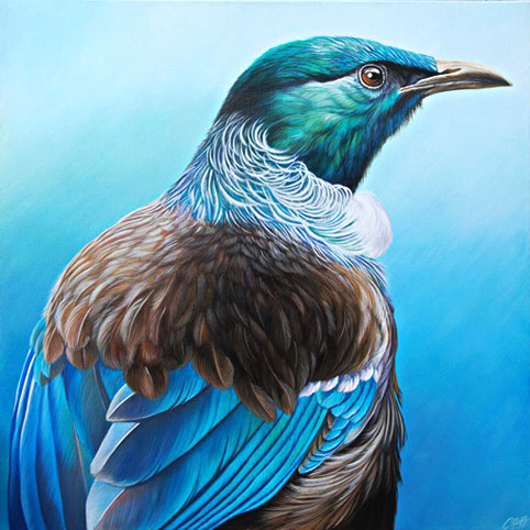 craig platt nz bird and wildlife artist